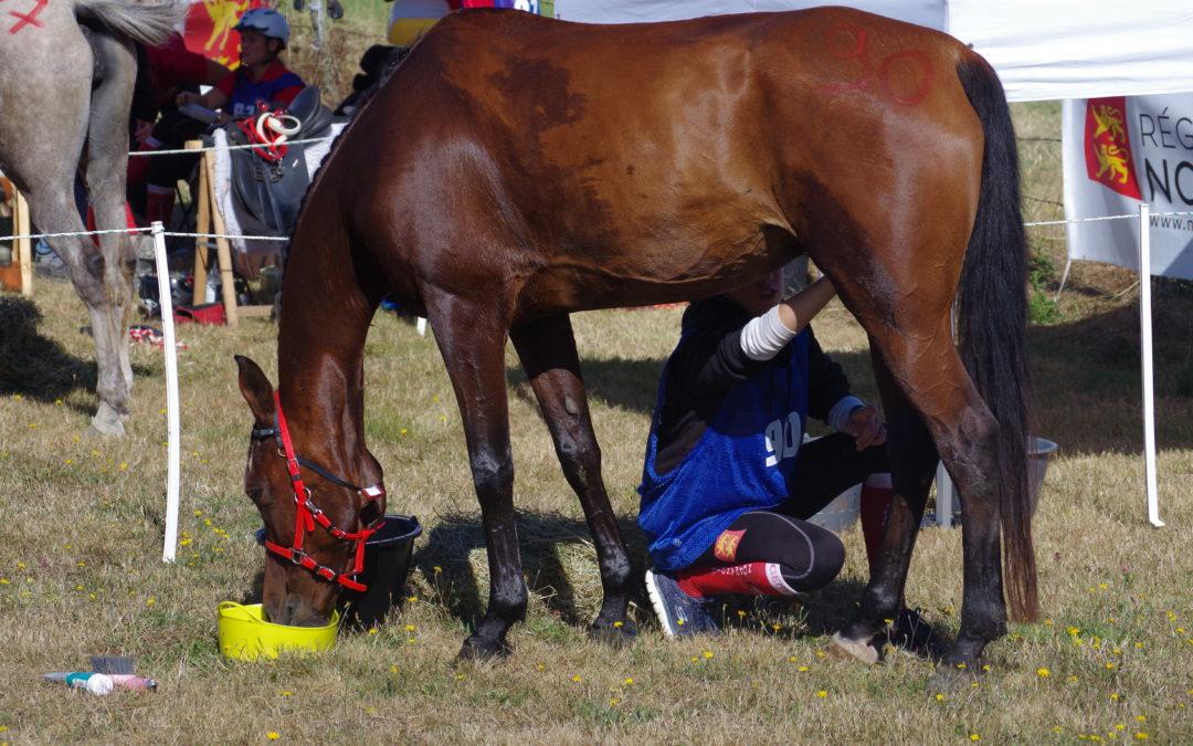 Soins du cheval d'endurance
